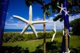 シェル 天然の貝殻 スターフィッシュ 3個セット 貝殻 シェル シーシェル seashell  通販 ハワイアンウエディング 席次